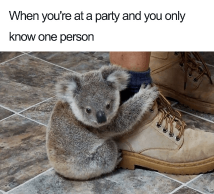 Introvert at a party koala