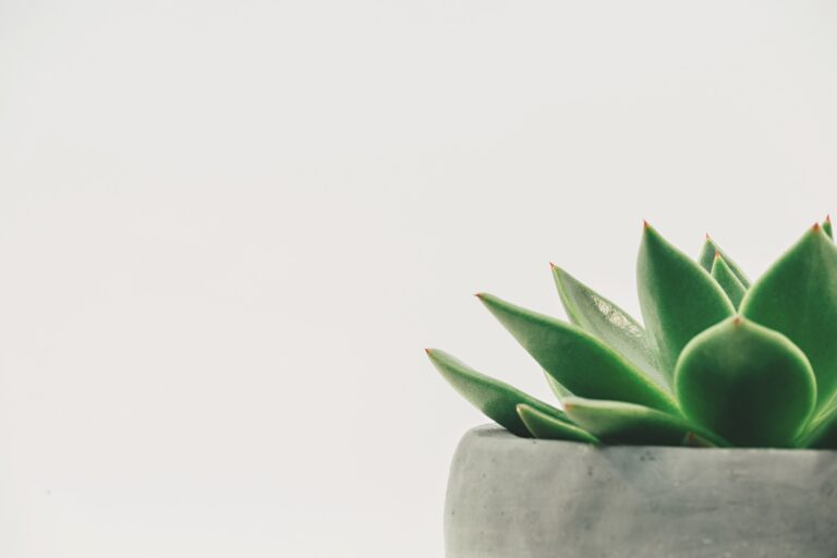 picture of a plant in minimalist style